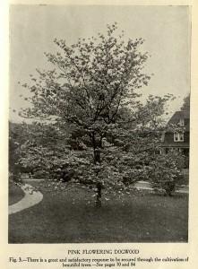 Cridland, fig. 3