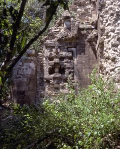 Tikal roofcomb